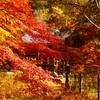死ぬまでに行きたい|埼玉県おすすめ絶景スポット|嵐山渓谷(らんざんけいこく)