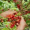 69歳の珈琲親父にはサードウェーブコーヒーは似合わない、手頃なぜいたく品コーヒー市場が似合っている