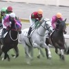 2.20 (土)  阪神競馬 注目馬