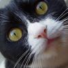 猫がくしゃみを連発!花粉症なの?目の症状は?
