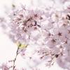 空気公団と春の曲 (後編)