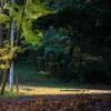 折角の休日は雨。カルガモと戯れる[千里南公園]2016.11.20