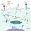 mRNAワクチンの実用第一弾 期待は高いが、慎重に!
