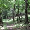 富士山の原生林を歩く