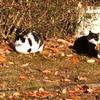 ご近所の地域猫活動 - Community Cats