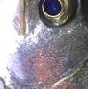 「魚に飢えた心」に染み入る一本・・・!