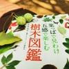 【樹木図鑑 おすすめ 前編】外に持ち出しやすく、検索しやすい樹木図鑑をご紹介