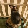 ウサギのちまき今日の2枚『ふたたび・・・』