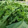 旬の野菜 春 1 Cima di rapa (チーマ ディ ラーパ)  1