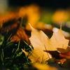 【美輪明宏】文化が思いやりを作り出す。ポール・ベルレーヌの『落葉』