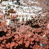 毎日桜を撮ってる気がする