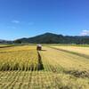 籾擦りと稲刈りの日々と『RONIN』