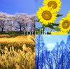 韓国語で春夏秋冬!これぐらいは言えるようになりたい。。。