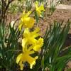 いっぺんに春!