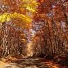 過ぎた日の悲しみ あの夜の恋の歌 枯葉 autumn leaves