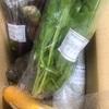 かまベジ 鎌倉のお野菜
