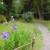 名残の紫陽花と桔梗