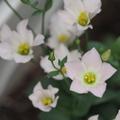 先日購入したレンズの試し撮りも兼ね、両親が購入した花々の写真を撮った話し。