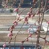 『徒然草』を読みませんか ~ 大東文化大学地域連携センターのオープンカレッジ ~