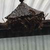新城市でカーポートにできたハチを駆除してきました