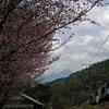 春うららの裏道を野尻駅へ。