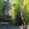 """迫力満点 木の上からの滑り台!Tree house """"The Ian Potter Children's WILD PLAY Garden Centennial Parkland ~センテニアルパークランド~"""""""