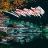 【紅葉のリフレが美しい!】昭和記念公園で夜散歩してきた。