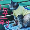 平成ジャンプ猫 本編だニャ(=^・^=)の巻