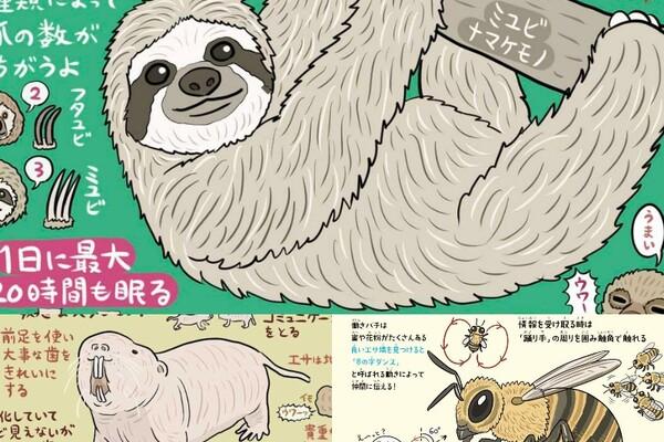 ナマケモノはサボるために「命をかける」 ふしぎな生き物の生態から学ぶ処世術|至高の無駄知識(寄稿:ぬまがさワタリ)