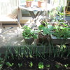 最近のごはんと、庭