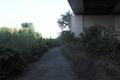 【35℃】桂川 京滋バイパス下は草もさりん