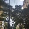 街路樹がデカい