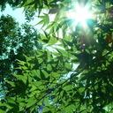 夏の日ざかり