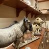 群馬県立自然史博物館|カップルにも人気のデートスポットだった:群馬県富岡市