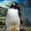 鴨川シーワールドのペンギン