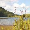 【NZワーホリ】ニュージーランドはロトルア。ついにワーホリに来た!【サニーデイ・クリスマス】