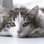 子猫を飼ってから5日間のリアルな猫日記を公開!リアルな大変さやトラブルも...