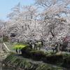 2019.04.06 真岡行屋川の桜
