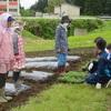 5月28日 ムラサキの植え付け作業(4年総合的な学習の時間)