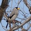 日本 2月20日の自宅周辺の野鳥たち