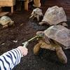 爬虫類好きにはたまらない!小さな子供も触れて楽しめる体感型動物園iZoo