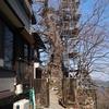 御嶽駅→御岳山(ロックガーデン)→瀬音の湯 神代ケヤキ治療中、瀬音の湯のカタクリ