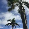 【沖縄】50代主婦がスマホで撮った写真でも、沖縄の空の色はこんなにきれい。更に楽しめるOkinawa!