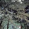 夜桜見物と屋台グルメの感想