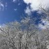 ニノ滝、氷瀑!!!