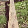 エンドレス杉板塗り
