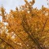 秋から冬があっという話