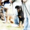 犬のトレーニング中に飼い主がやってしまいがちな8の失敗。