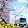 秩父鉄道の電車と桜のコラボを撮りに行ったのですが