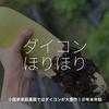 742食目「ダイコンほりほり」小園家家庭農園ではダイコンが大豊作!@年末年始